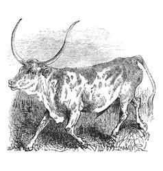 Brazilian cow vintage engraving vector image vector image
