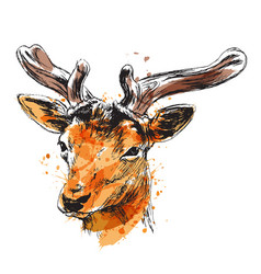 Colored hand sketch of a young deer vector