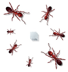 Ants vector image vector image