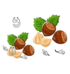 Cartoon isolated hazelnut with brown nuts vector