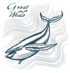 Great Whale vector image vector image