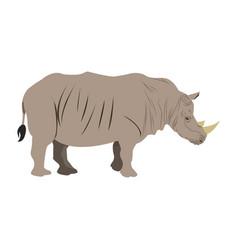 rhino wild animal africa exotic mammal vector image