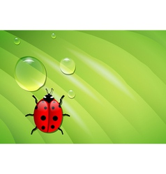 Ladybug on wet leaf vector