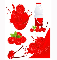 Berry products vector