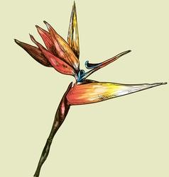 Bird of paradise sketch vector