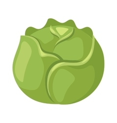 Brussels sprouts vector