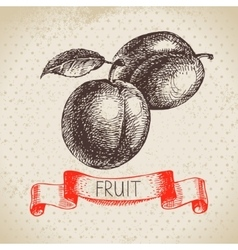 Hand drawn sketch fruits plum Eco food background vector image