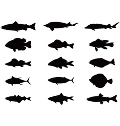 Silhouette of sea and river fish vector image