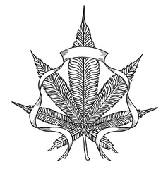 Cannabis3 vector image
