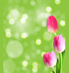 spring and summer tulip flower natural background vector image