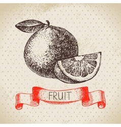 Hand drawn sketch fruit orange eco food vector