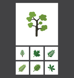 Flat icon nature set of acacia leaf leaves maple vector