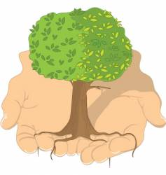 tree in hands vector image