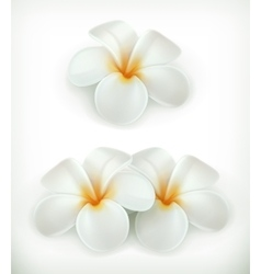 White flowers icons vector