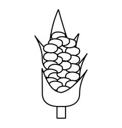 Corncob icon outline style vector