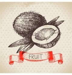 Hand drawn sketch fruit coconut eco food vector