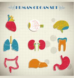 Human internal organs set vector