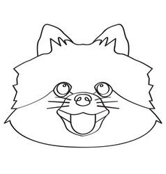 isolated pomeranian avatar vector image