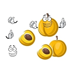 Cartoon sweet yellow apricot fruit character vector