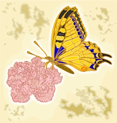 Butterfly and flower as engraving vintage vector image vector image