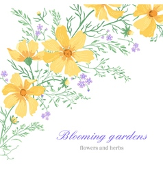 Greeting card with beautiful cute flowers on a whi vector image