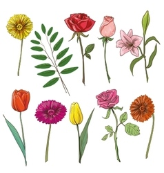 Set of traditional flowers for bouquet vector image