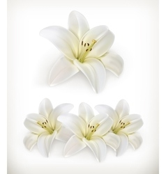 White lily icons vector