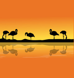 at riverbank with silhouette flamingo scenery vector image