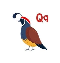 Quail funny alphabet animal vector