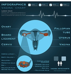 Vagina infographic infocharts health and medical vector