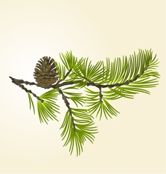 Branch pine and pine cone natural background vector