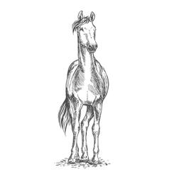 Standing horse sketch portrait vector image vector image