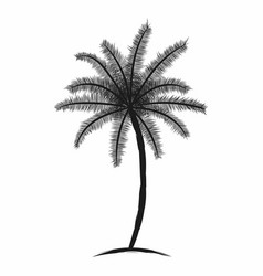 tropical palm tree with leaves black silhouette vector image