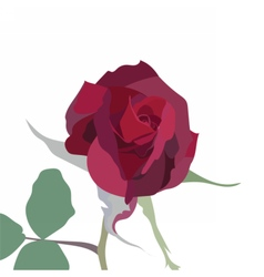 Watercolor Red Rose isolated vector image
