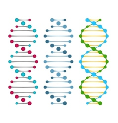 Three variants of double strand DNA molecules vector image