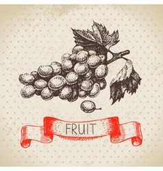 Hand drawn sketch fruit grape eco food background vector