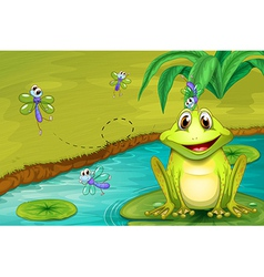 Frog and flies vector image vector image