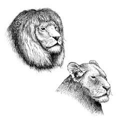 head of lion and lioness vector image