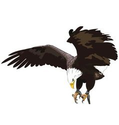 Golden Eagle vector image