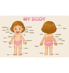 My body vector