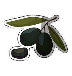 olives leaf slice vegetable vector image
