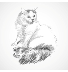 sketch of cat vector image vector image