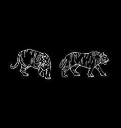 Tiger emblem set vector