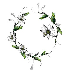 Passiflora white wreath vector