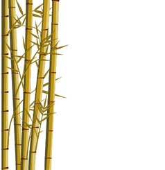 Bamboo with leaves on white background vector