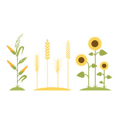 Wheat field sunflower icon cartoon vector
