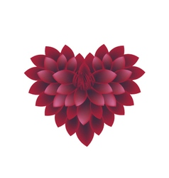 Red dahlia flowers in a heart shape vector