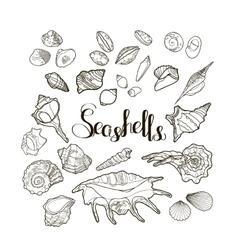 Collection of seashells vector image
