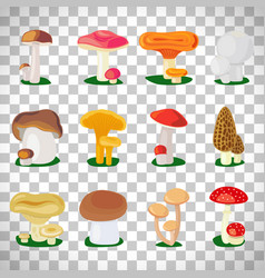 edible mushrooms on transparent background vector image vector image