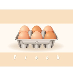 Fresh eggs vector